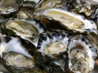 Oesters - Hoe Oesters Openen?